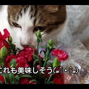 【猫動画】野菜が大好きな猫