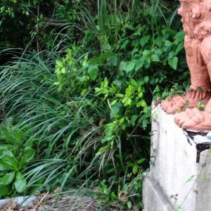 6月23日沖縄『慰霊の日』島唄が伝える平和への祈り