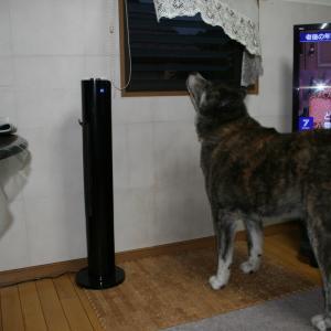 61.秋田犬蘭と富里のスイカを買いに行きました。