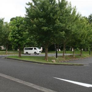 65.秋田犬蘭と千葉県立北総花の丘公園に行ってきました。