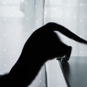 平均寿命が超えたネコと暮らすこと