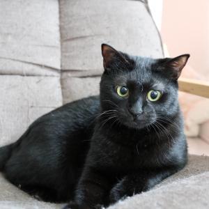 半目になりがちな黒猫キミのキリッとした画像をみつけた。