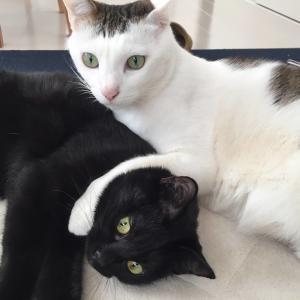 人間関係も猫関係も難しいもんです。