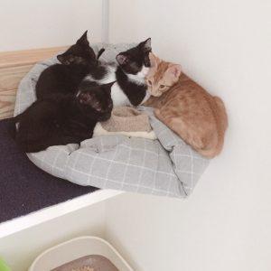 大猫と子猫のグルーミング 子ネコ保護72日目(2018.8/18)