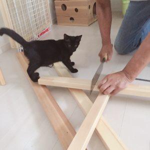 ケージの増築しました 子ネコ保護90日目(2018.9/5)