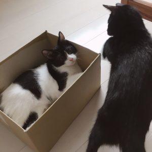 体重測定。みんな大きくなりました 子ネコ保護93日目(2018.9/8)