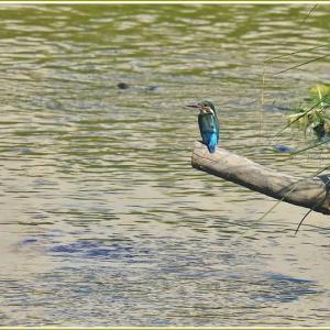 天白川の野鳥 part-13