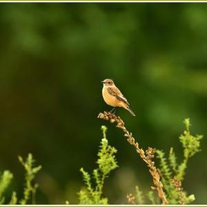 天白川の野鳥 part-15