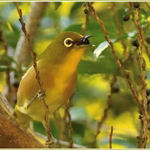 相生山緑地の野鳥 part-3