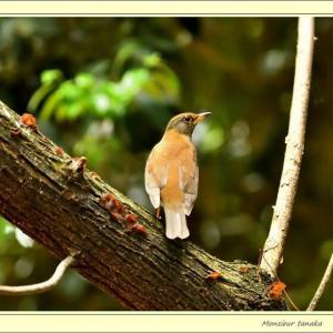 瑞穂公園の野鳥ー04-17
