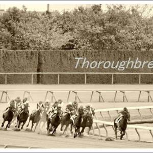 敬老の日と競馬場