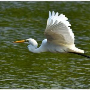 天白川の野鳥 part-4