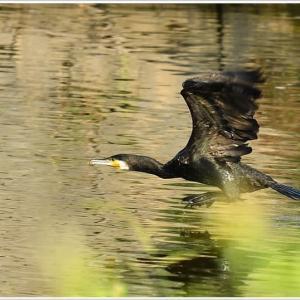 天白川の野鳥 part-5