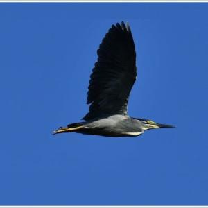 天白川の野鳥 part-6