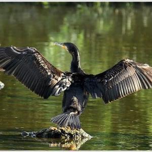 天白川の野鳥 part-7