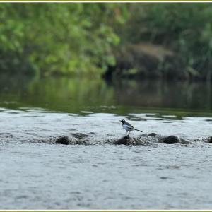 天白川の野鳥 part-9