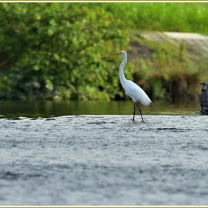 天白川の野鳥 part-12