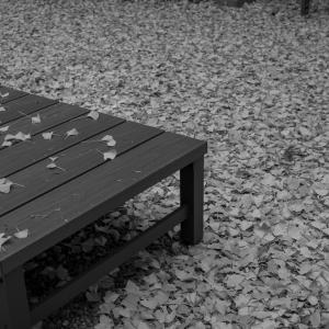 泉神社の秋