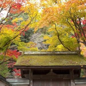 室生寺の紅葉は長谷寺と合わせてがおすすめ!他のスポットや宿泊は?