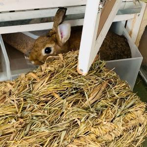 ウサギのちまき今日の1枚『ちまき一瞬浮いた?』
