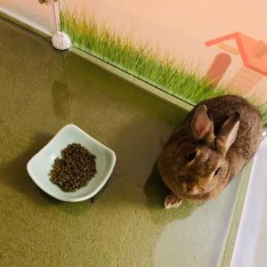 ウサギのちまき今日の1枚『険しい表情』