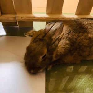 ウサギのちまき、秋眠しがち・・・