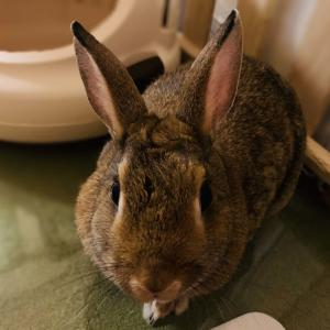 ウサギのちまき今日の1枚『ワイルドだろお?』