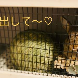 ウサギのちまき安全対策〜コード&コンセント〜