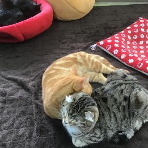 倉敷の猫カフェ 美観ネコに遊びに行ったよ!