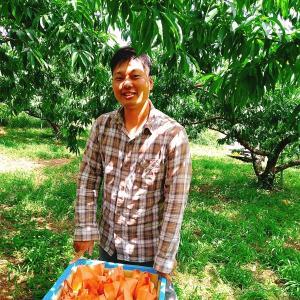 岡山の桃農家 犬塚農園に桃を買いに行ってきました!
