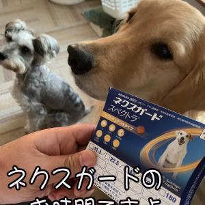 犬にとっては薬も大好物?