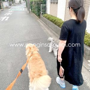 4連休最後の朝散歩
