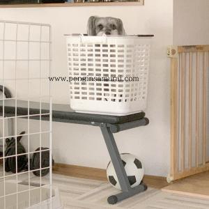 籠の中の鳥ならぬ犬