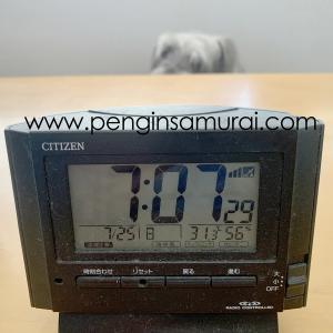 朝から気温が30℃超えですよ~