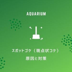 【スポットゴケ】緑色の斑点状コケがはえる原因と7つの対策