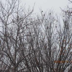 山田池の野鳥