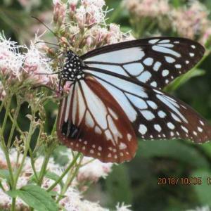 蝶を呼びたい