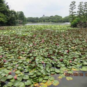 水生植物たち