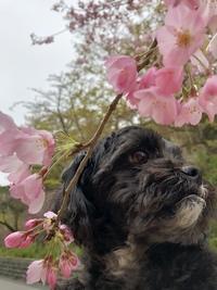 4月の定休日と「なんて春だ!」