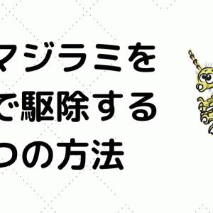 【アロマ×物理攻撃】アタマジラミを4日で駆除する4つの方法