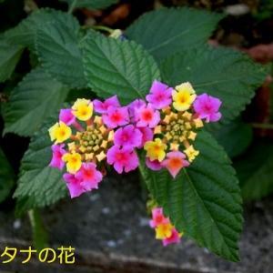 温室の花と小さい秋