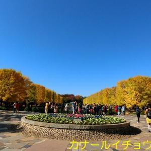 国営昭和記念公園 黄葉・紅葉まつり