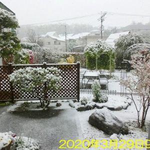 雪が降った~!