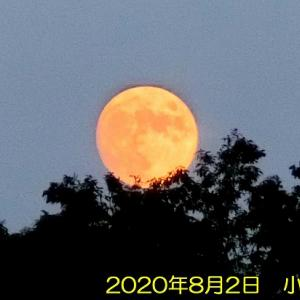 小望月とハーブ&ハープの日