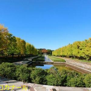 国立昭和記念公園に行きました