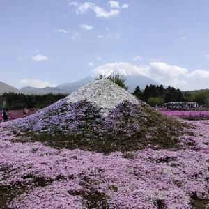 だいぶ前だけど・・・今年5月に行きました・・・富士芝まつりと富士五湖観光をご紹介!