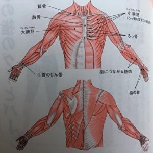 【きくち体操】手・腕を意識して動かす!脳を刺激して活性化させる体操