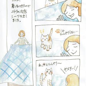 ひんやりシーツの巻 お布団大好き!わらびの日常#5
