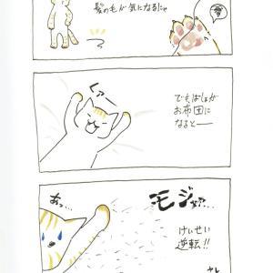ぬけ毛のお悩みの巻 お布団大好き!わらびの日常#3