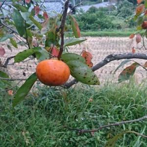 秋の美味しいモノ